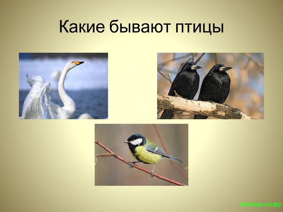 Лебедь, ворона, иволга