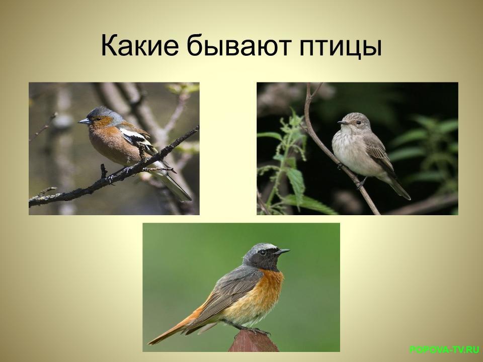 Кто такие птицы