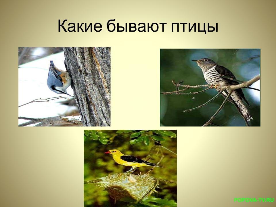 Какие это птицы