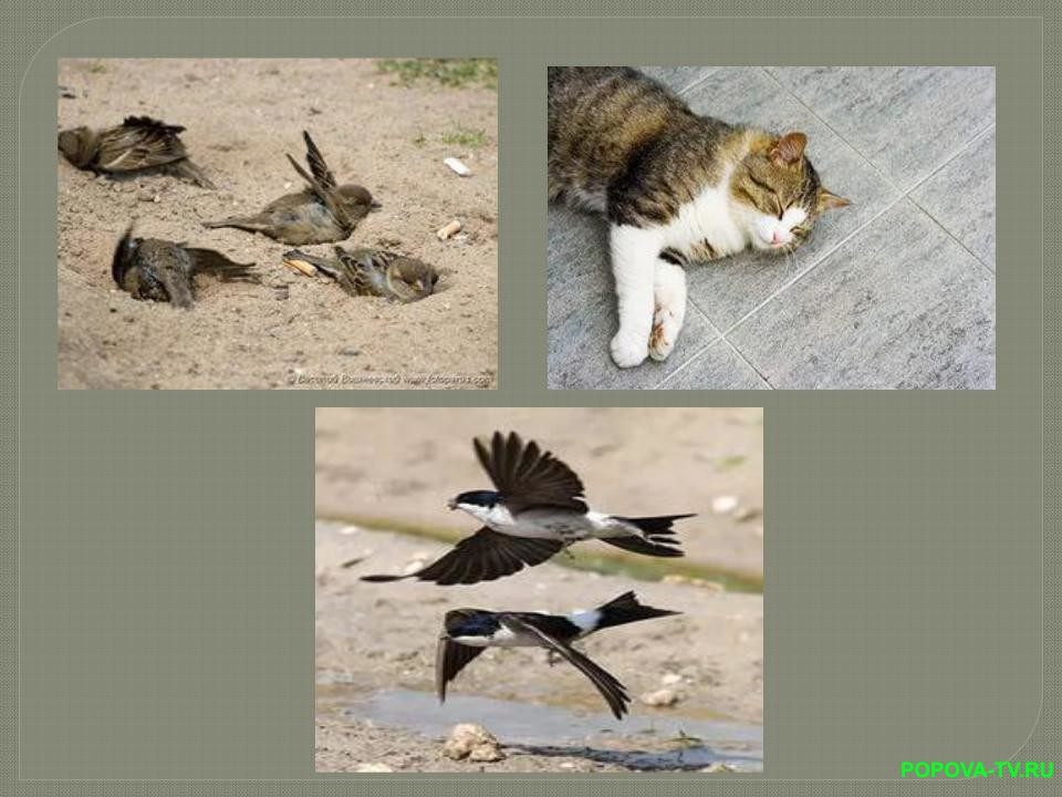 Животные отдыхают