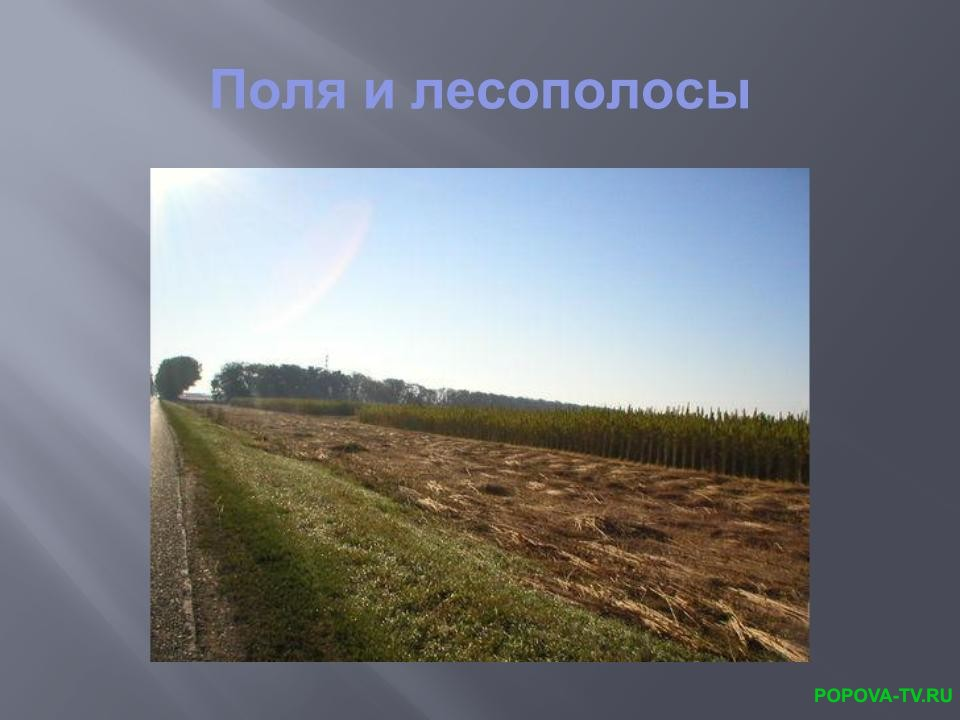 Поля и лесополосы