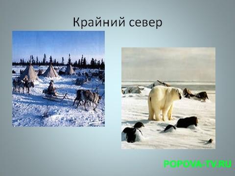Природа Крайнего Севера