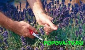 Как собирать лекарственные растения