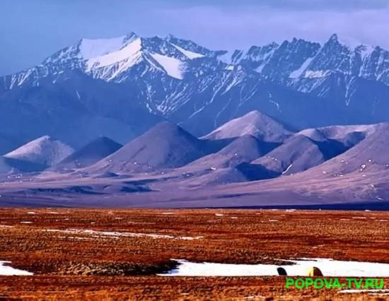 Природные зоны России: арктические пустыни.