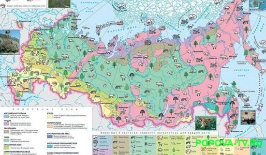 prirodnye-zony-rossii