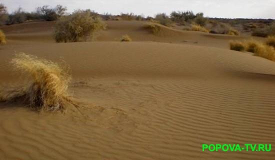 pustyni